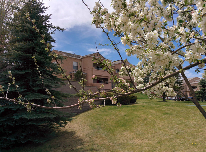 Apartment building in distance framed by a tree branch with blossoming white flowers